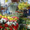 Baltic Tour from Kaunas - Riga flower market